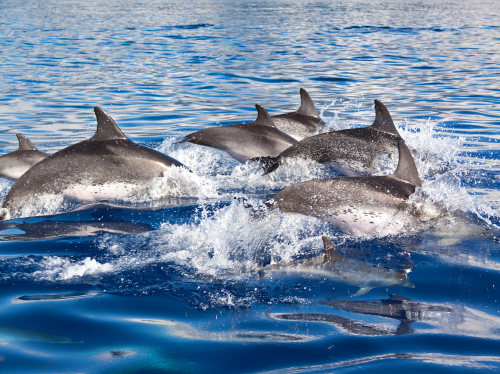 Dolphin watching from Lagos